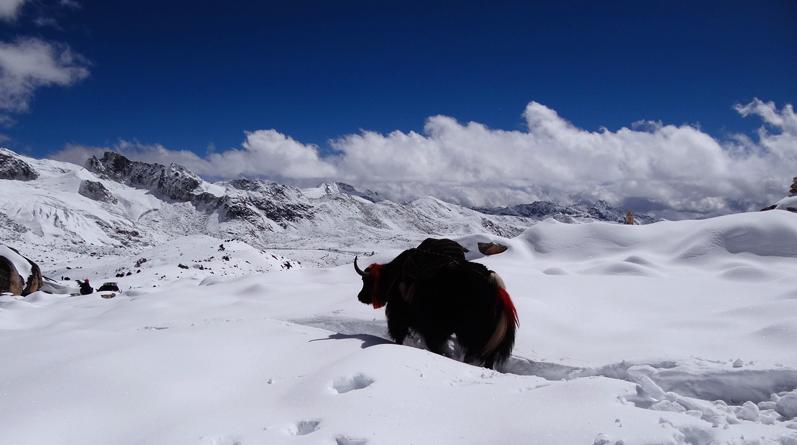Snowman Trek in Bhutan